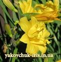 Изображение Yellow Bouquet