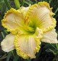 Изображение категории Крупноцветковые и мелкоцветковые